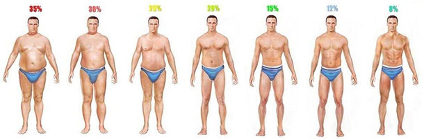 male body fat